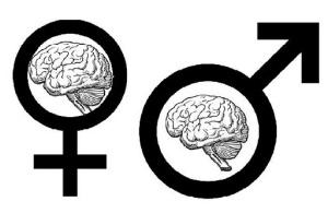 genderbrains1